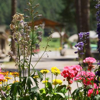 Entrée du camping © Camping Le Bois des Alberts
