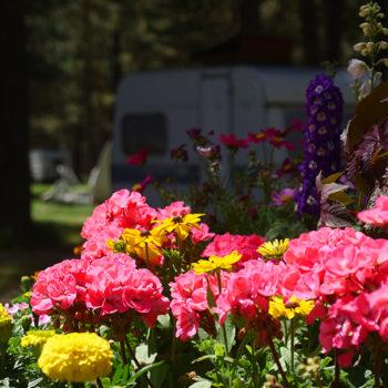 Camping fleuri © Camping de Montgenèvre