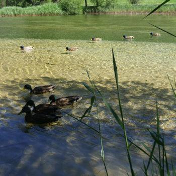 Lac © Camping ** du Bois des Alberts